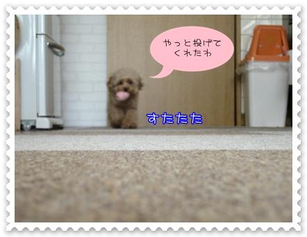b12_20110207213336.jpg
