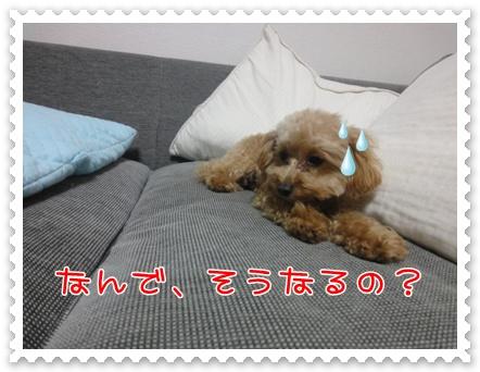 b12_20110219215003.jpg