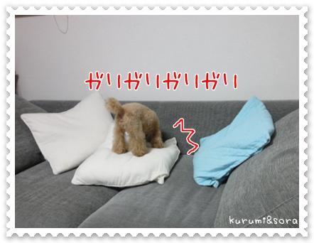 b12_20110505144748.jpg