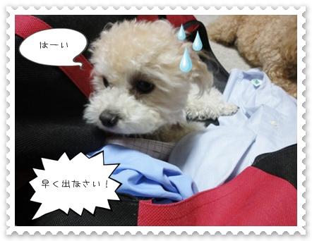 b12_20110806191155.jpg