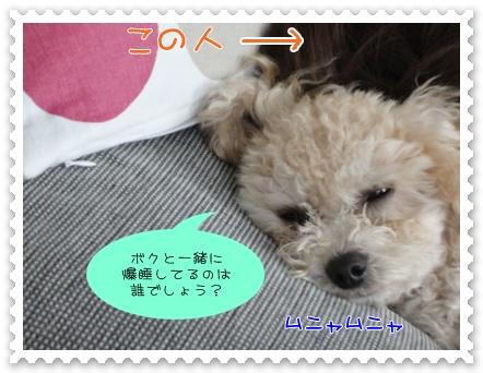 b12_20110927193845.jpg