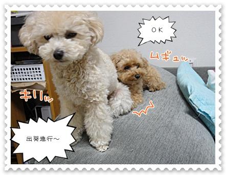 b12_20111130214649.jpg