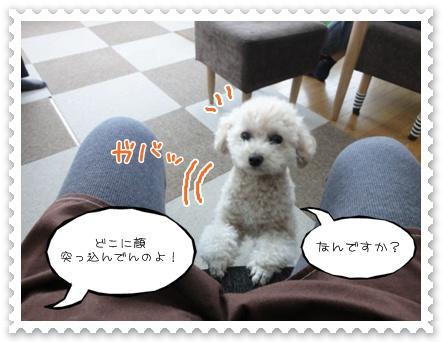 b12_20120103230047.jpg