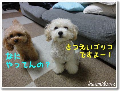 b13_20101127153149.jpg