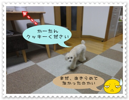 b13_20110110015050.jpg