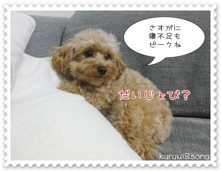 b13_20110310211143.jpg