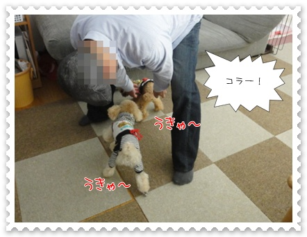 b13_20110618155008.jpg