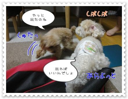 b13_20110806191154.jpg