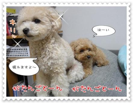 b13_20111130214737.jpg