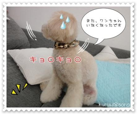 b14_20110409120853.jpg