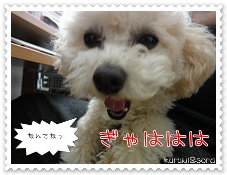 b14_20110417155133.jpg