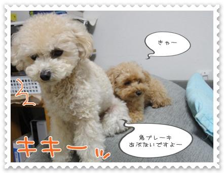 b14_20111130214737.jpg