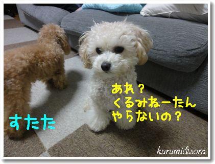 b15_20101127153147.jpg