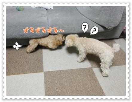 b15_20120129165030.jpg