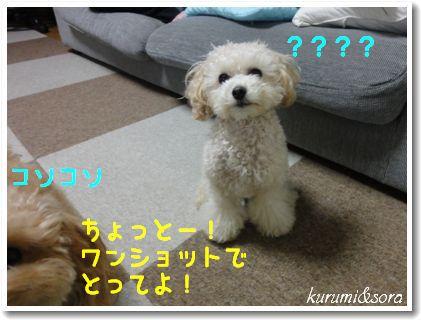 b16_20101127153147.jpg