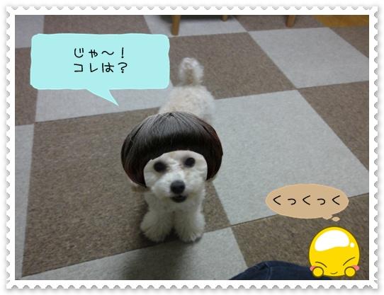 b16_20110110015156.jpg
