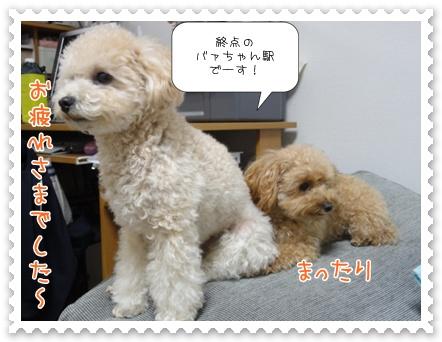 b16_20111130214737.jpg