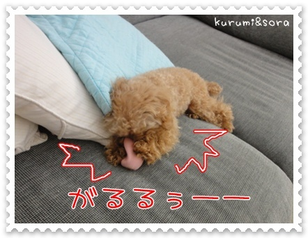 b18_20110511164233.jpg