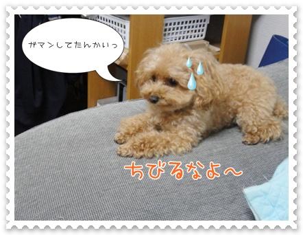b18_20111130214736.jpg