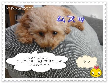 b1_20110121233509.jpg