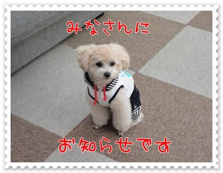 b1_20110618154853.jpg