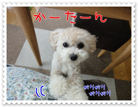 b1_20110723162947.jpg