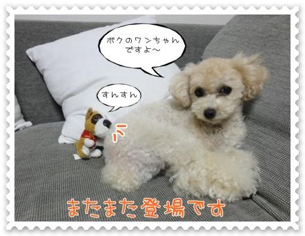 b1_20110903181041.jpg