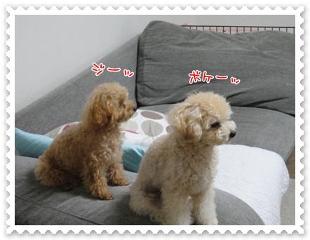 b1_20111130214603.jpg
