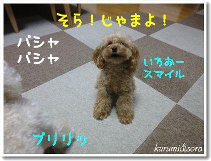 b20_20101127153211.jpg