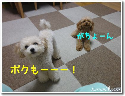 b21_20101127153211.jpg