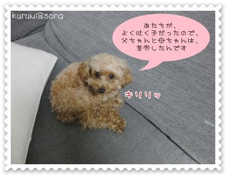 b2_20110303201753.jpg
