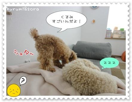 b2_20110511163916.jpg