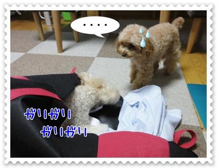 b2_20110806190948.jpg