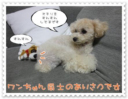 b2_20110903181041.jpg