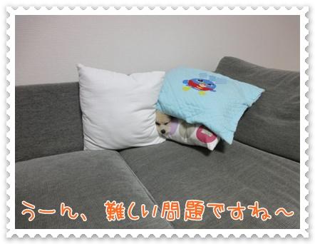 b2_20111116200126.jpg
