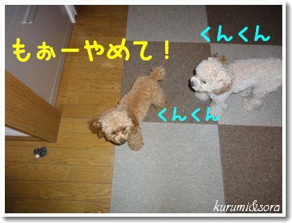 b3_20101127153031.jpg