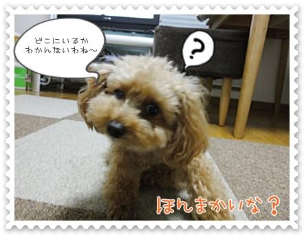 b3_20111116200125.jpg