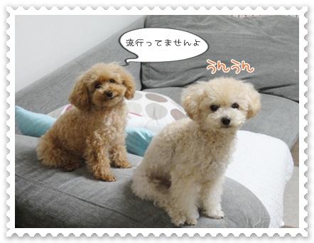 b3_20111130214602.jpg
