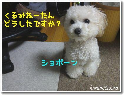 b4_20101127153030.jpg