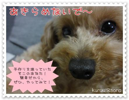 b4_20110303201751.jpg