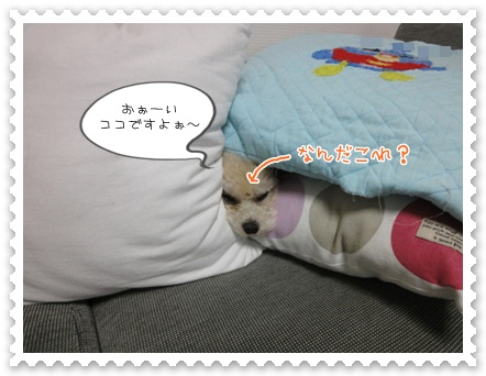 b4_20111116200125.jpg