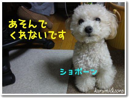 b5_20101127153030.jpg