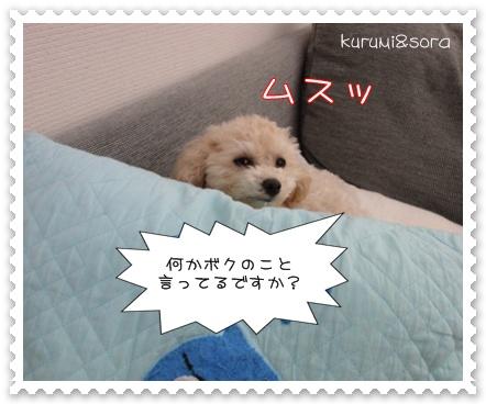 b5_20110121233508.jpg