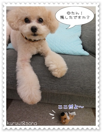 b5_20110409120648.jpg