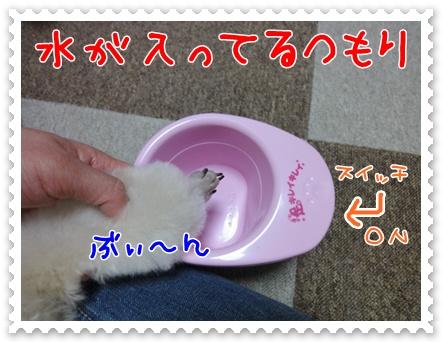 b5_20110606194517.jpg