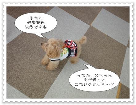 b5_20110618154852.jpg