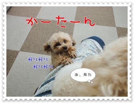 b5_20110723162946.jpg