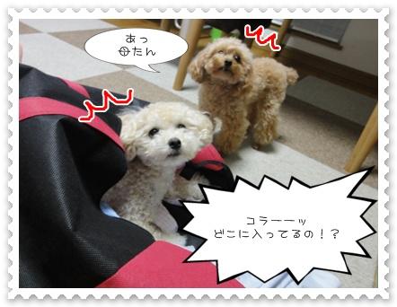 b5_20110806191109.jpg