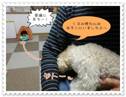 b5_20111107225821.jpg