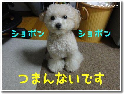 b6_20101127153029.jpg